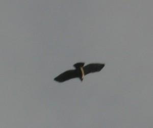 vogel_centralparc_161014